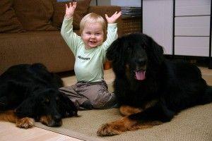 Img profesores perros ninos escolares ayudas infantiles beneficios colegios art