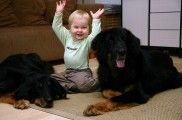 img_profesores perros ninos escolares ayudas infantiles beneficios colegios listado