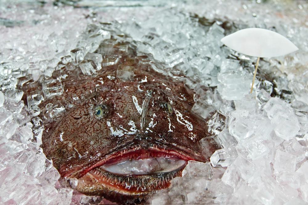 Img rape pescado boca hd