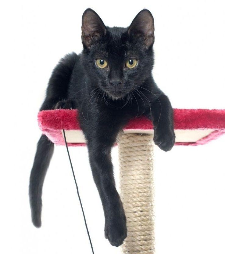 Img rascadores gatos caseros art