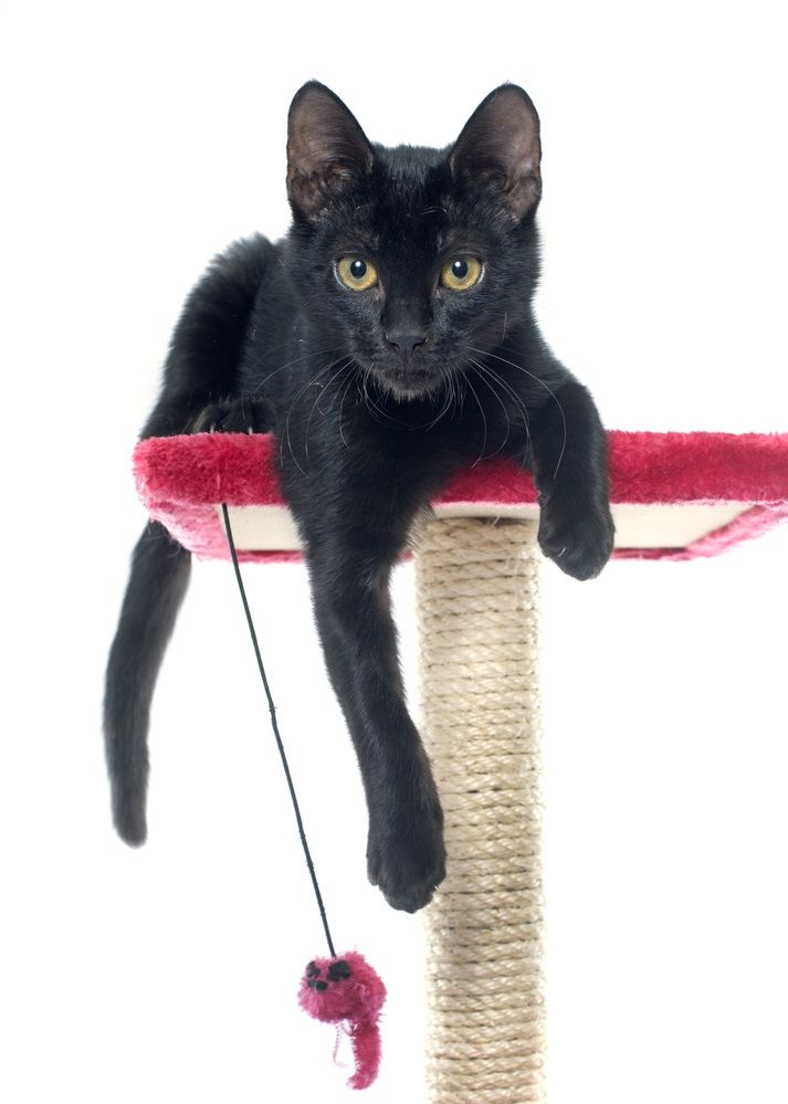 img_rascadores gatos caseros