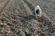 Img rastreando piedras comer perros listado