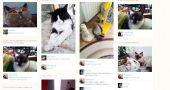 Img redes sociales gatos