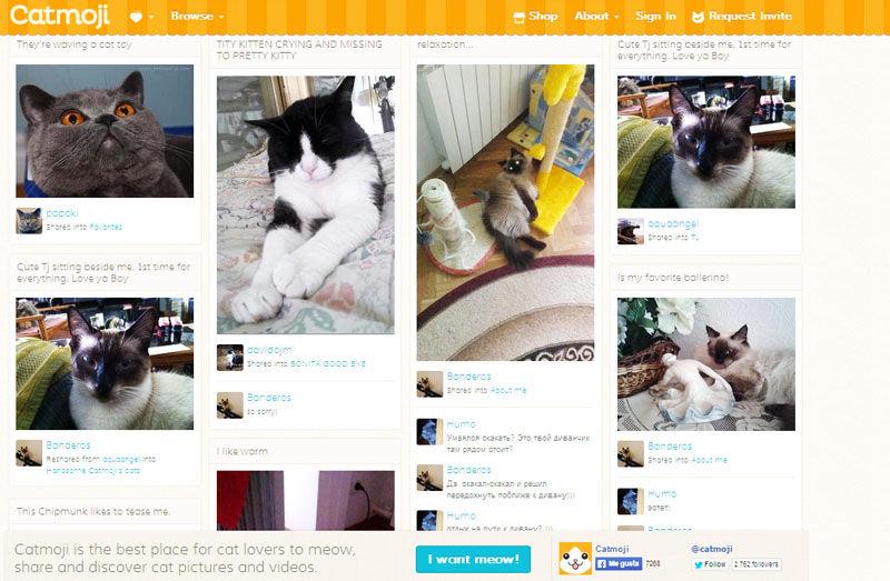 img_redes sociales gatos