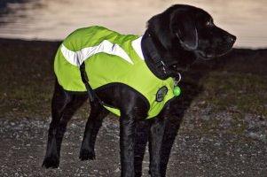 Img reflectantes perros oscuridad chaletos animales mascotas ropas art