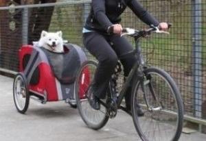 Img remolque bici perros pedalear mascotas art