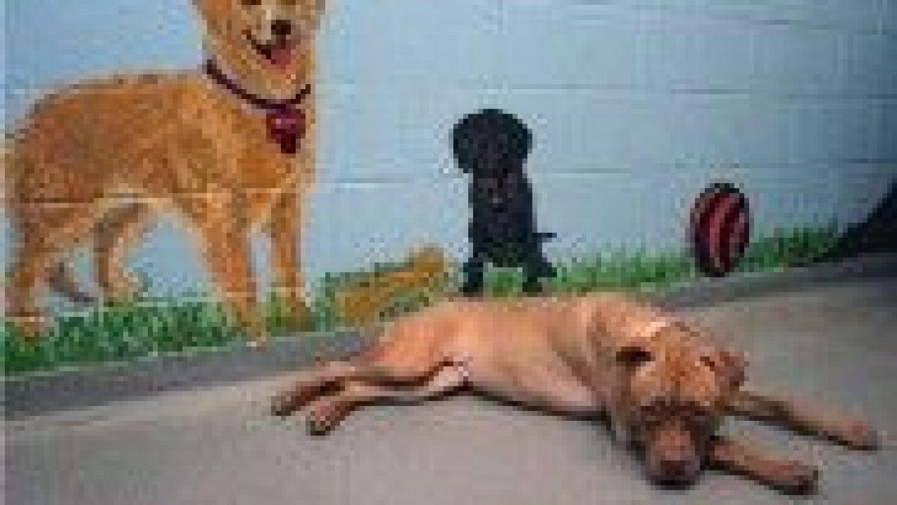 Centros De Adopción De Perros Cómo Funcionan Consumer