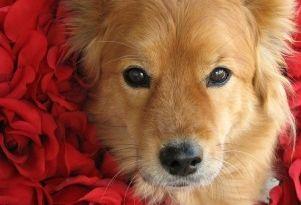 Img residencias perros mascotas hoteles lujo espana art