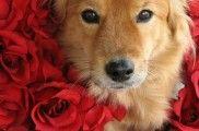 Img residencias perros mascotas hoteles lujo espana listado
