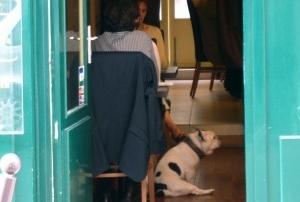 Img restaurantes admiten perros tapas cervezas mascotas animales mascotas art
