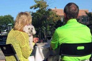 Img restaurantes perros admiten perros tapas madrid barcelona coruna bares mascotas animales art