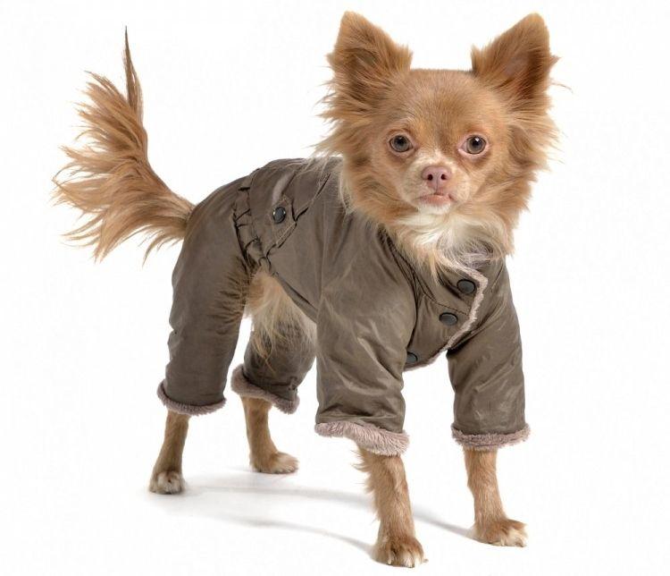 Img ropas para perros 2 art