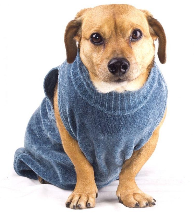 Img ropas para perros art
