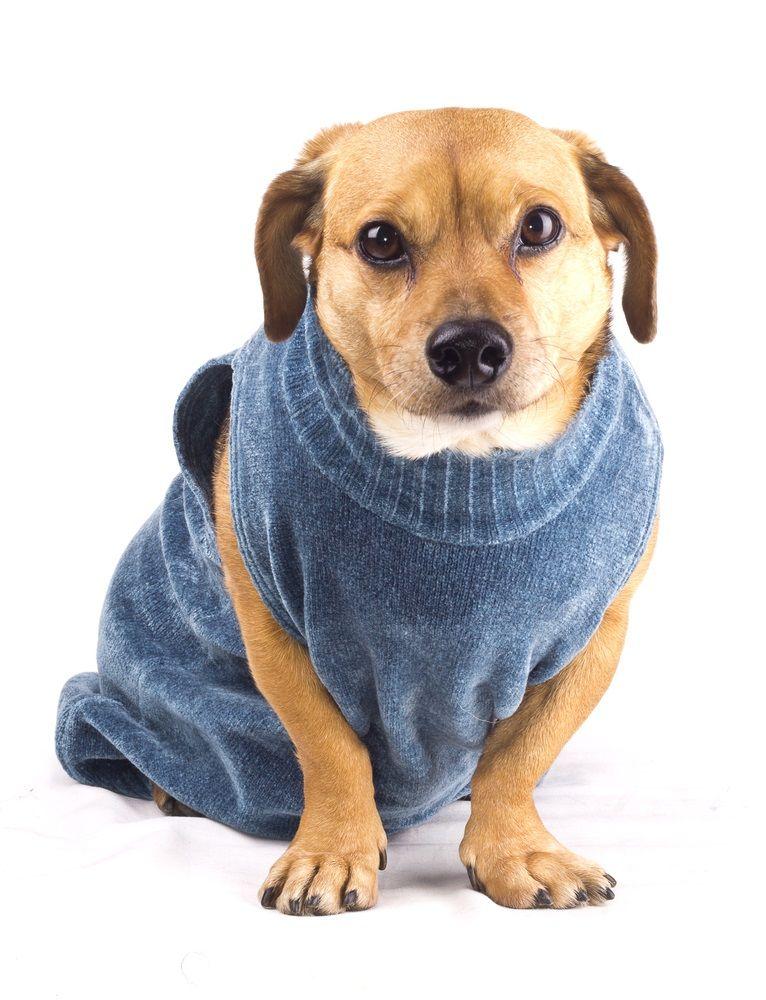 Cómo Hacer Ropa Para Perros En Casa Consumer