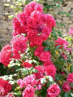 Img rosalart