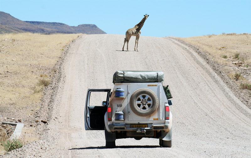 Img safari
