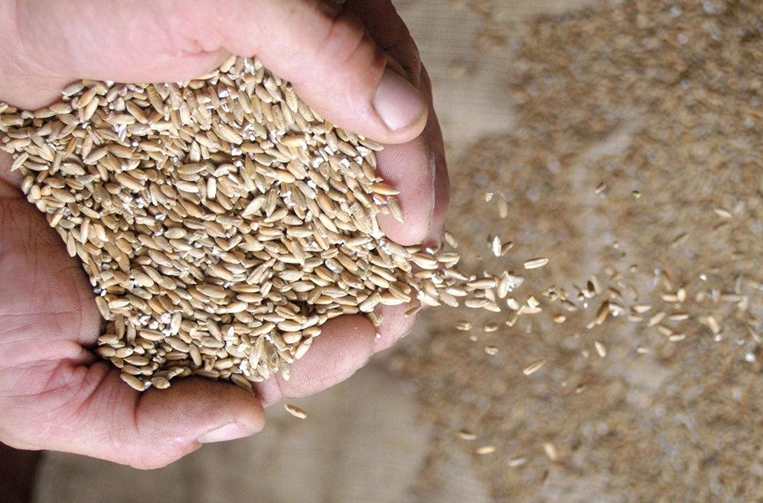 Img salvado trigo hd