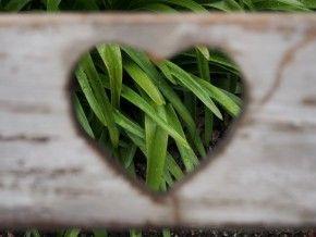 Img san valentin corazon verde