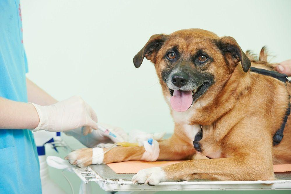Img sangre perros