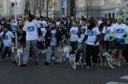 Img sanperrestre defensa animal carrera madrid perros listado