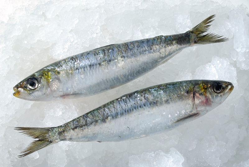 img_sardinas 3