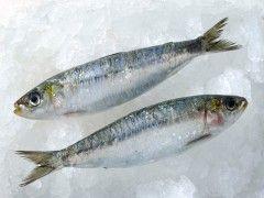 Img sardinas1