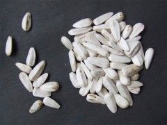 Img semillas