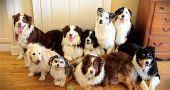 img_sentarse perro