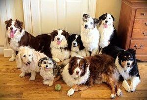 Img sentarse perros aprender obdediencia educacion adiestramientos mascotas art