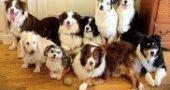 Img sentarse perros aprender obdediencia educacion adiestramientos mascotas listado