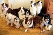 img_sentarse perros aprender obdediencia educacion adiestramientos mascotas listado