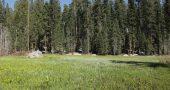Img sequoias