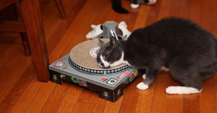 Img shocks gatos musica art