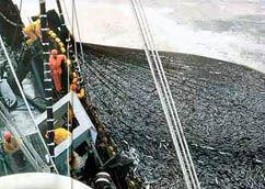 Img sobrepesca1