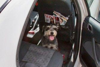 img_taxi perros viajar animales mascotas