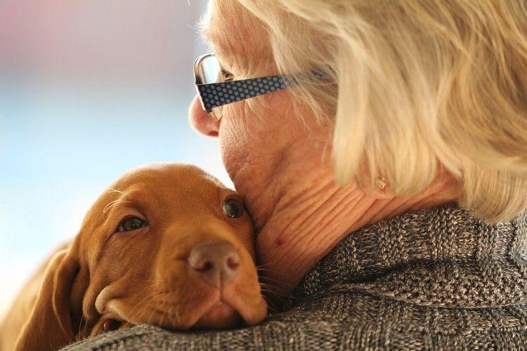 Img terapias animales 2 art