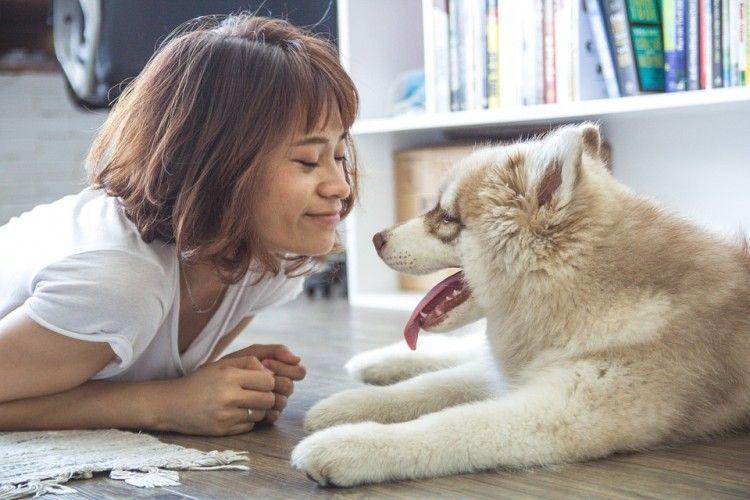 Img terapias animales 4 art