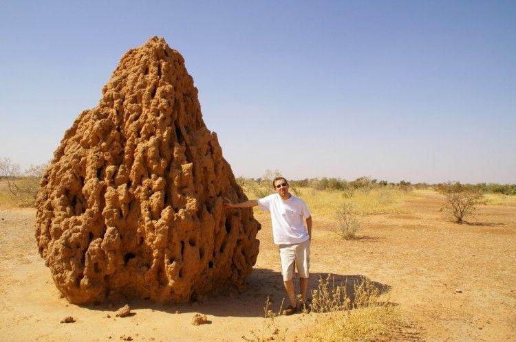 Img termitero