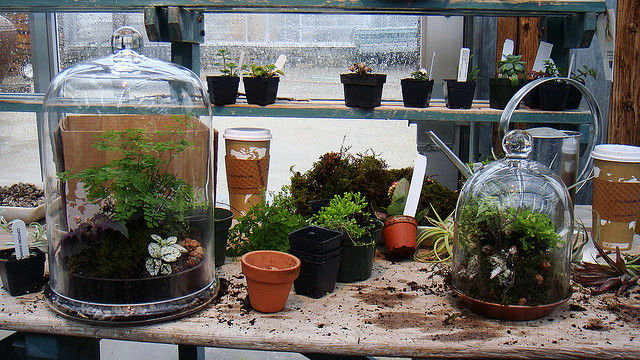Img terrario plantas