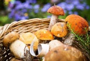 Img tesoros nutricionales bosque