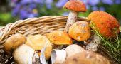 Img tesoros nutricionales bosque hd