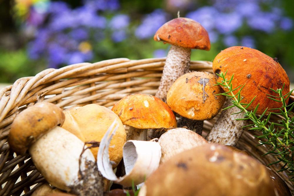 img_tesoros nutricionales bosque hd