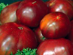 Img tomate12
