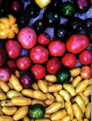 Irud. tomate5