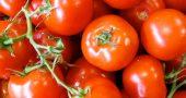 img_tomates 2