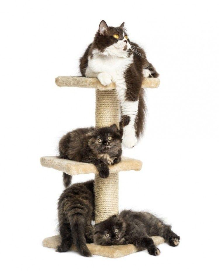 Img torres gatos hechas casa 3 art