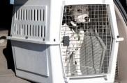 img_transporte mascotas viajar perros gatos listado