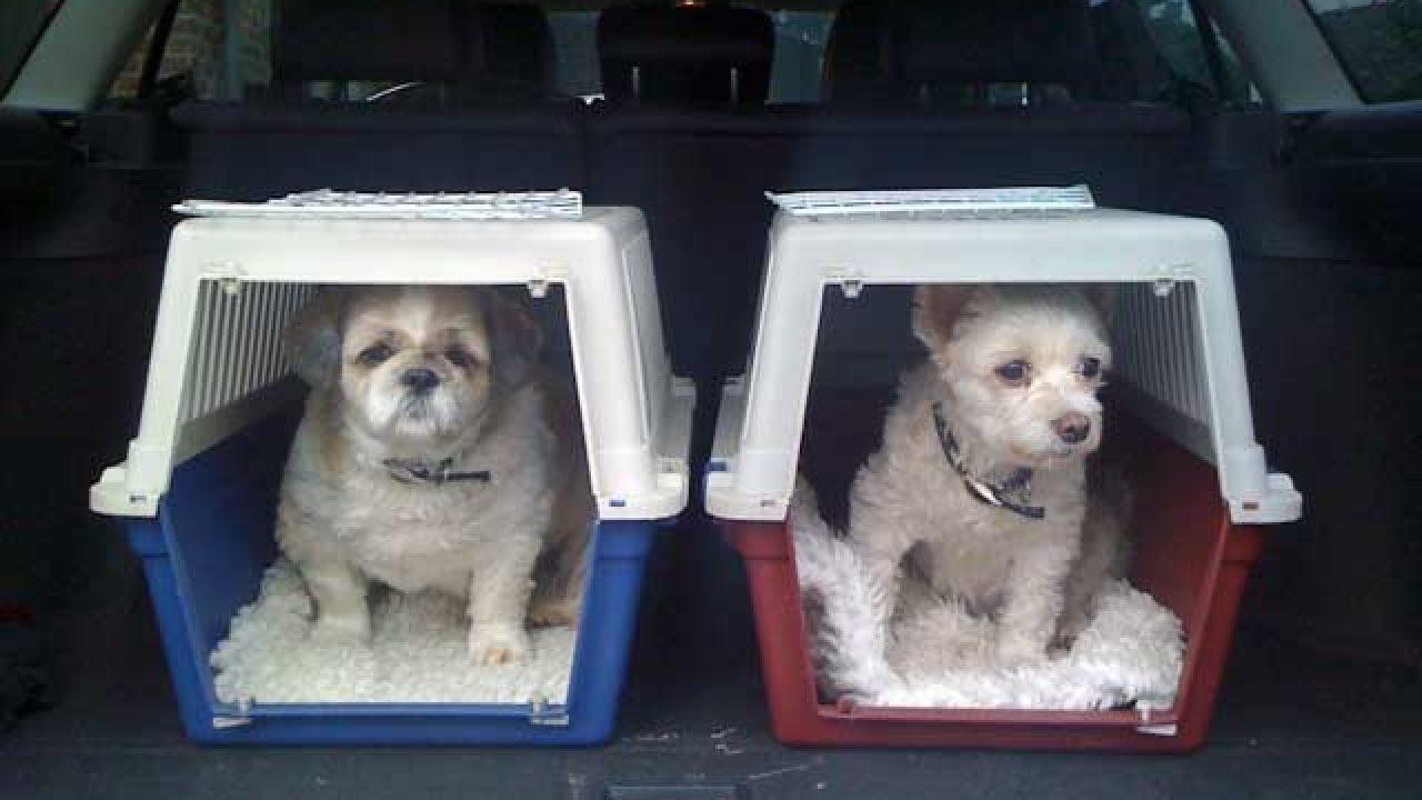 Viajar con el perro: qué tener en cuenta para disfrutar de un feliz viaje    Consumer