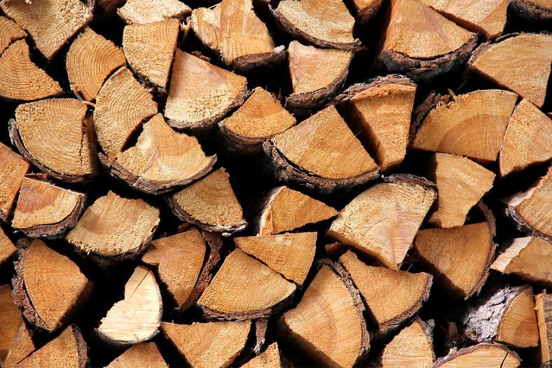 Img troncos ukola