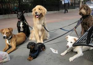 Img trucos no perder perro paseo art